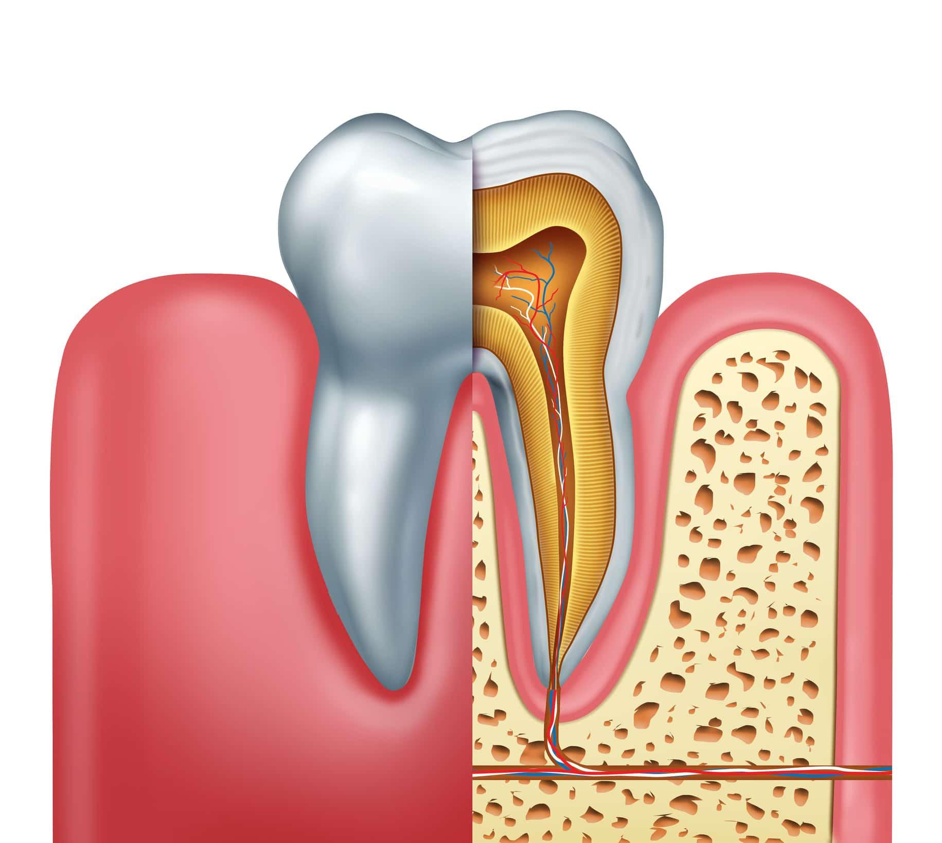 illustration of molar